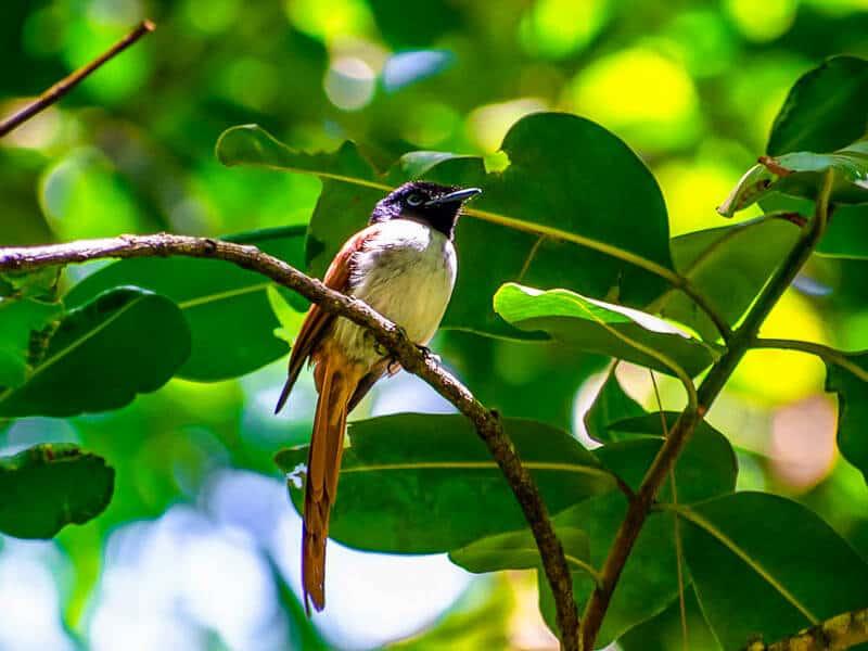 Endemic Birds