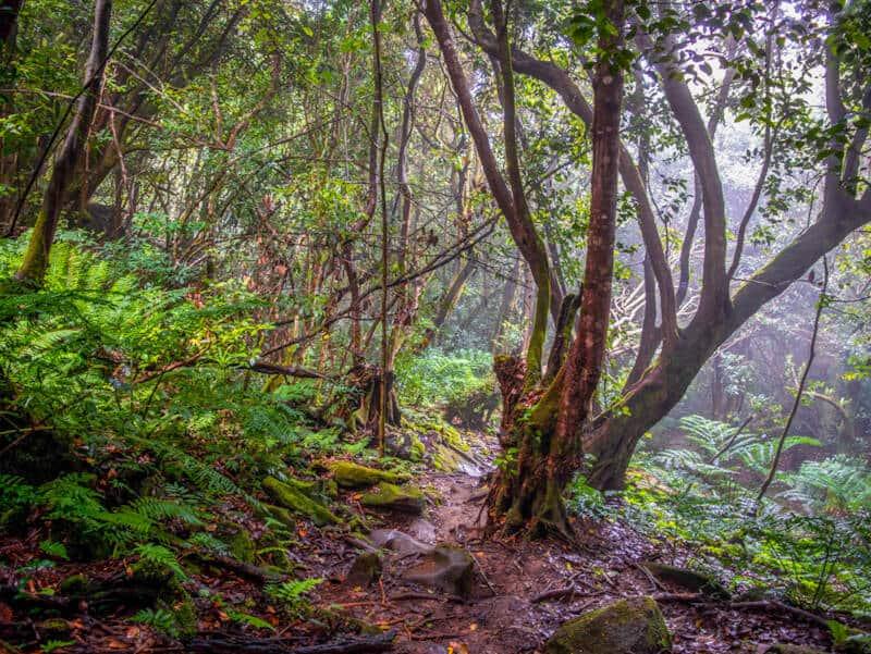 Hiking Trails in Seychelles