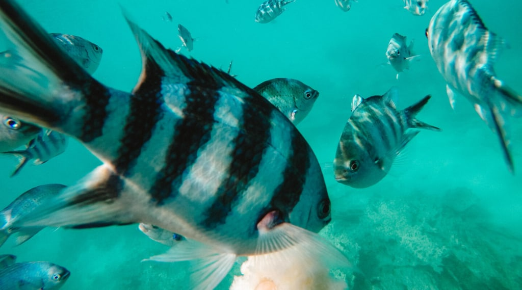 Scuba Diving in Sri Lanka: 5 Important Thing You Need to Know